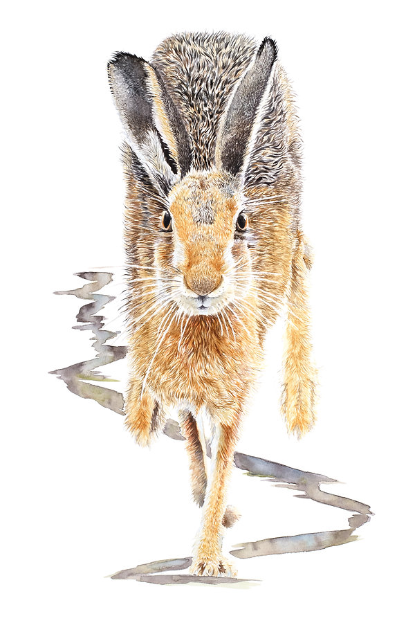 Hares To You