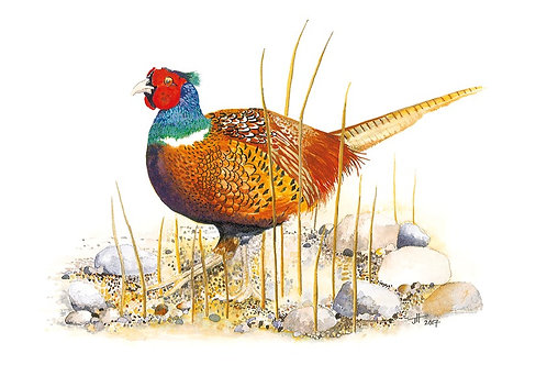 Pheasant Dreams card