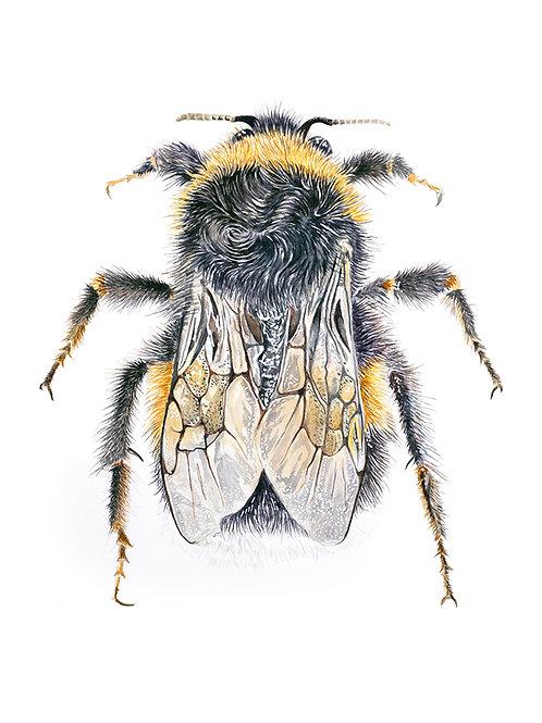 'Let It Bee'