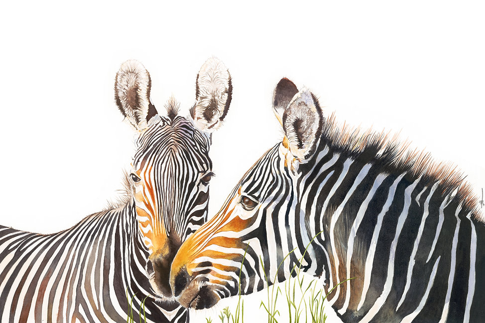Born Free, Zebra watercolour original