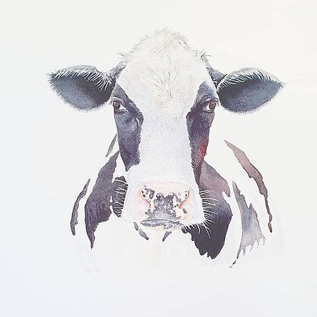 Friesian cow watercolour painting