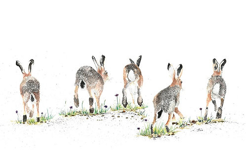 Receding Hare Line card