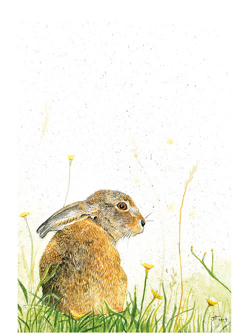 Springs Nearly Hare