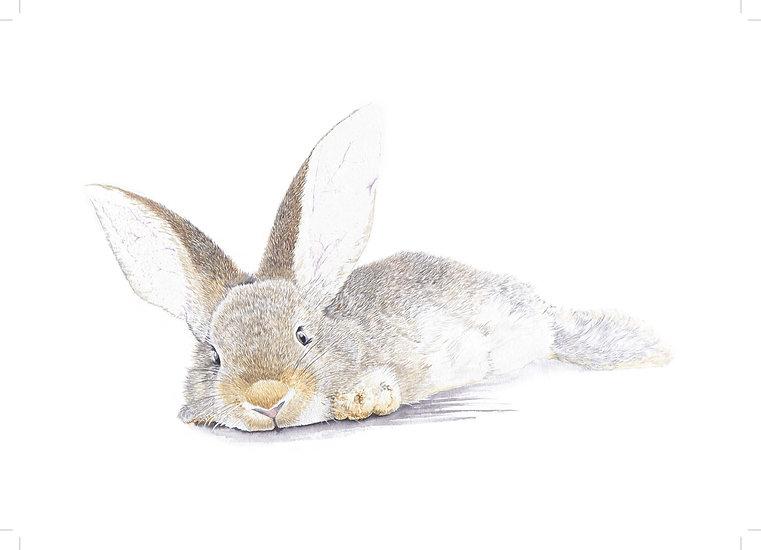 Bunny, rabbit, Watercolour painting