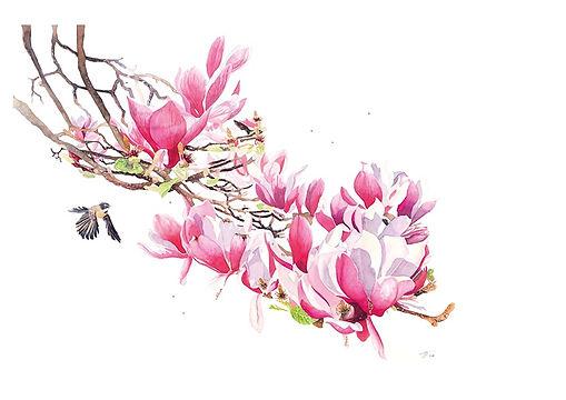 'Magnolia Spring'