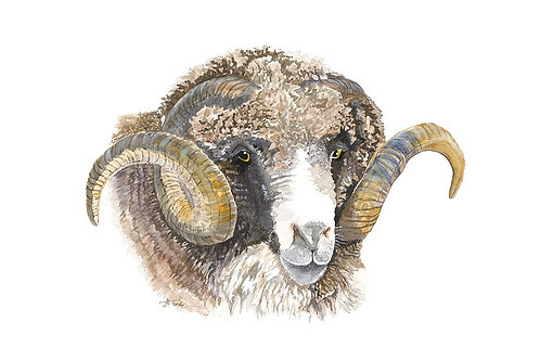 I Only Have Eyes For Ewe