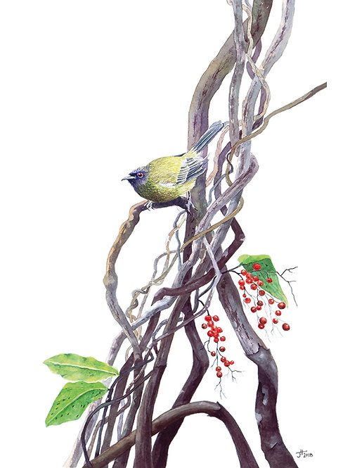 NZ Bellbird card
