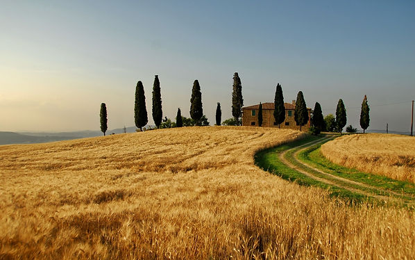 Italy-autumn-landscape-wheat-fields-tree