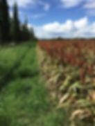 field-1621844_1920.jpg