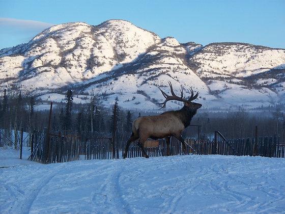 Circle D Ranch Elk - 45 lb. Box