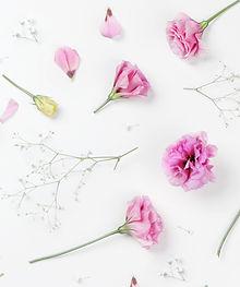 燐葉|癒し|花|色