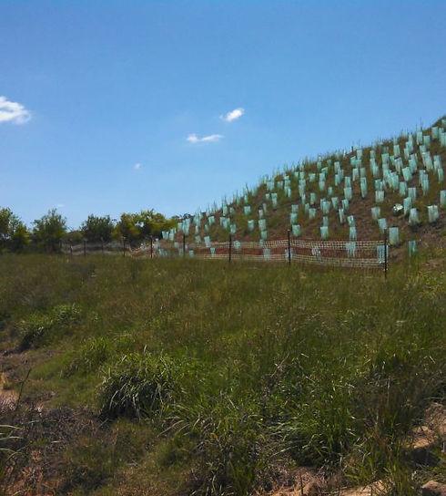 soil rehabilitation.jpg