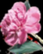 Background%252525252520copy_edited_edite