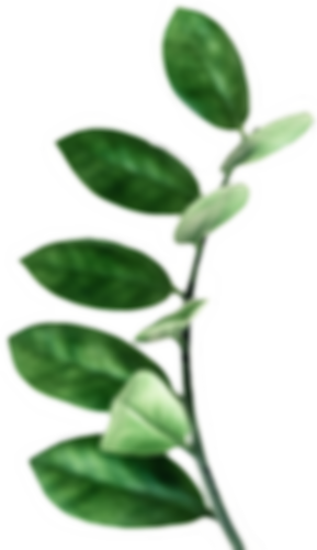 plant2_edited.png