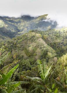 JMCC's Commitment to Protecting Cannabis Strains and Biodiversity in Jamaica