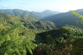 Jamaican Mountains
