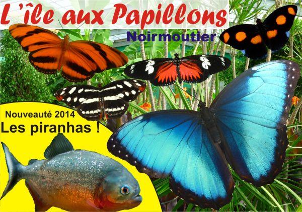 L'ile aux papillons à Noirmoutier
