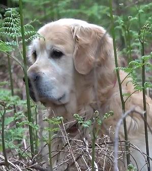 Buster Dog