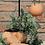 Thumbnail: Räder — Lanterne Terracotta GM