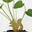 Thumbnail: Another Studio — Animal de plante à planter
