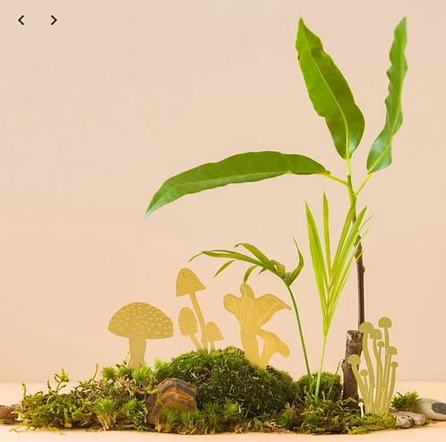 Another Studio — Champignons à planter