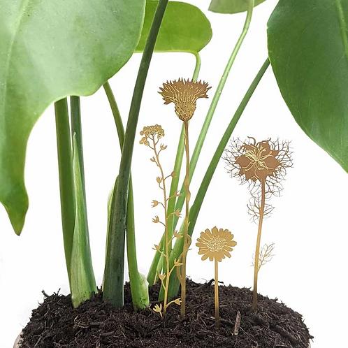 Another Studio — Fleurs à planter
