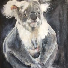 Ian Koala
