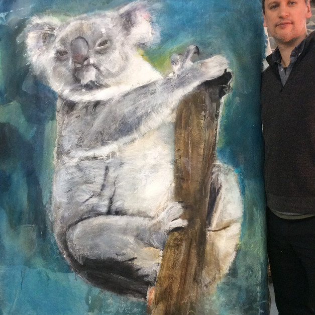 Ziv Koala