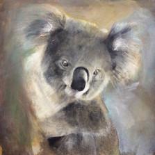 Tasha Koala