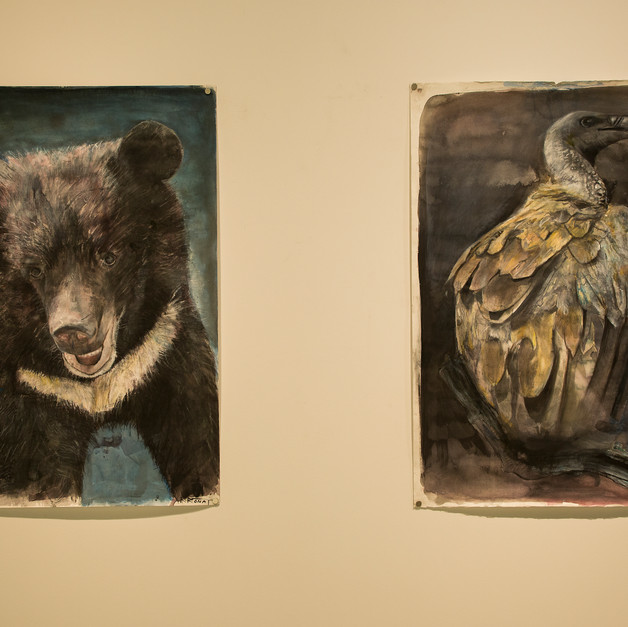 Formosa Black Bear and Vulture