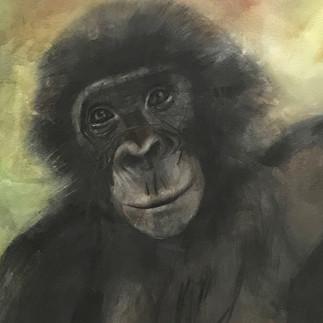 Bonobo Progresses