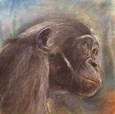 Bonobo portrait