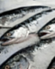 Sockeye-Salmon-on-Ice-5839e8745f9b58d5b1