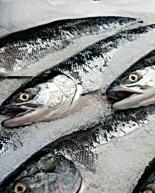 Sockeye-Salmon-on-Ice-5839e8745f9b58d5b1