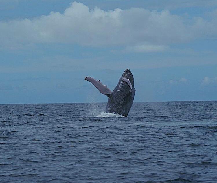 Whale in Montezuma