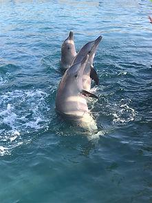 delfinesmontezuma.jpg