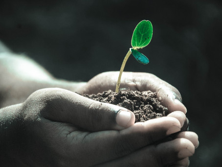 How to prevent soil pollution.