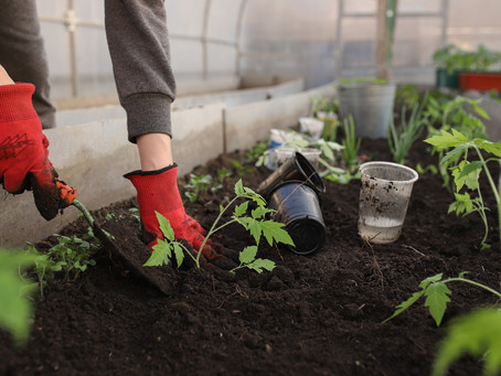 How to Create Nutrient-Rich Soil for Planting.