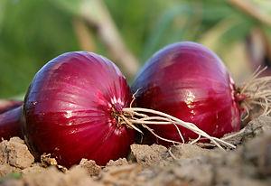 onion-1565604_1920.jpg