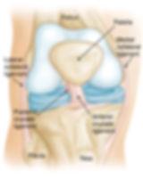 Sports  Arthroscopy Surgeon Cochin