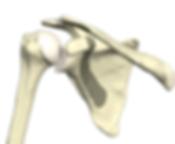 Shoulder Surgeon Cochin