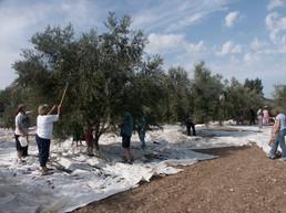 31-Kibbutz 2- © LPC.jpg