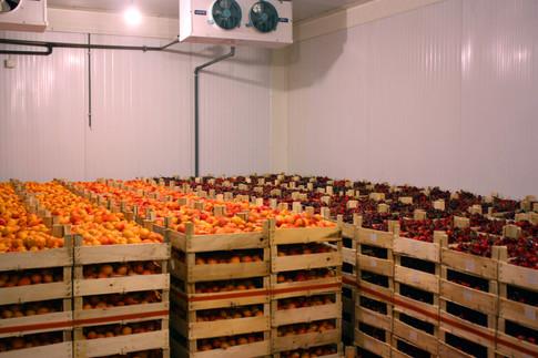 Hűtőkamráinkban tudjuk tárolni a gyümölcsöket kiszállításig.