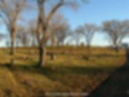 Burns Cemetery.jpg