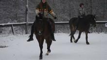 Bueskyting til hest - et prosjekt!