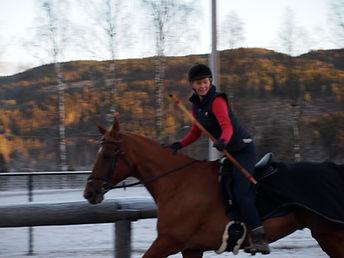 Bueskyting til hest