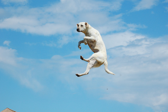 #MyMetric: Knowing What Makes Me Jump for Joy