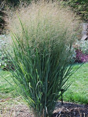 Plant of the Week 08/23/2019