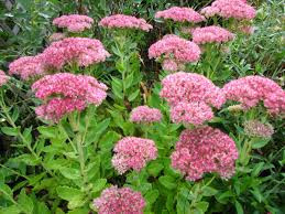 Plant of the Week 10/25/2019