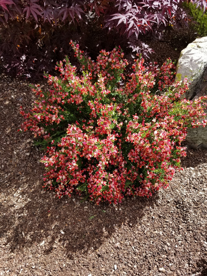 Plant of the Week 08/16/2019
